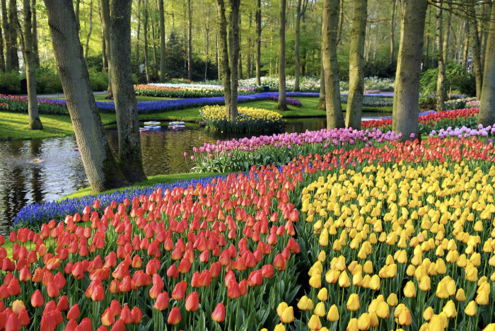 Keukenhof GardensTulip Holland River Cruise