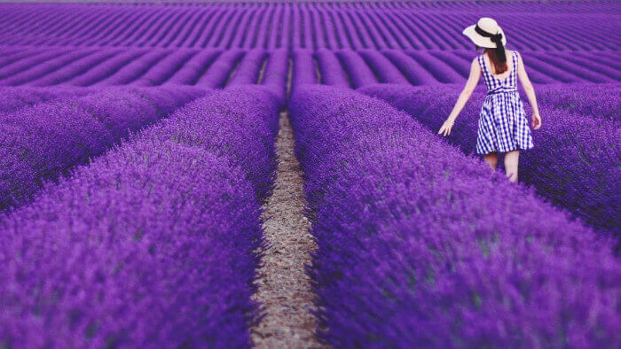Western Mediterranean Cruise Military and Veteran Discount Lavendar Fields South Of France