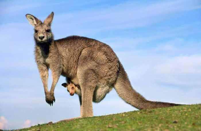military discount cruises Australia-New-Zealand