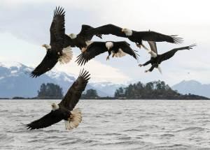EaglesAK