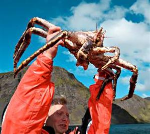 Honningsvag King Crab