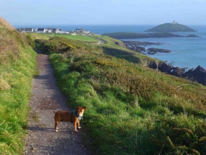 Bally Cotton Cliff Walk Cork Ireland Military and Veteran Discounts on all Northern Europe Cruises