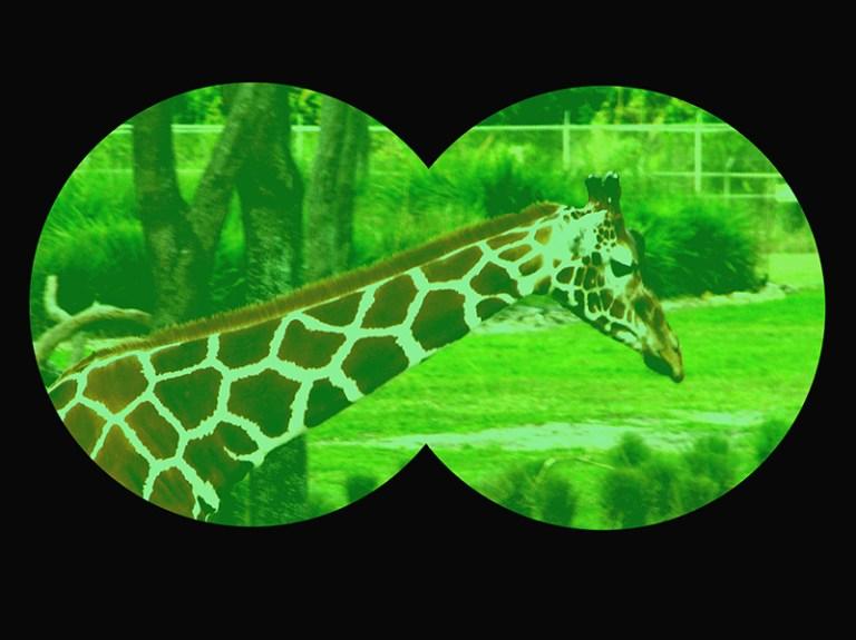 WDW's Night Vision Goggle Safari at the Animal Kingdom Lodge