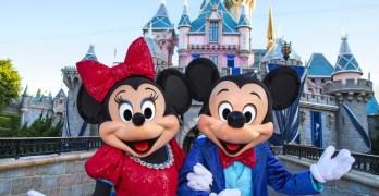 Military Disney Tips Surveys