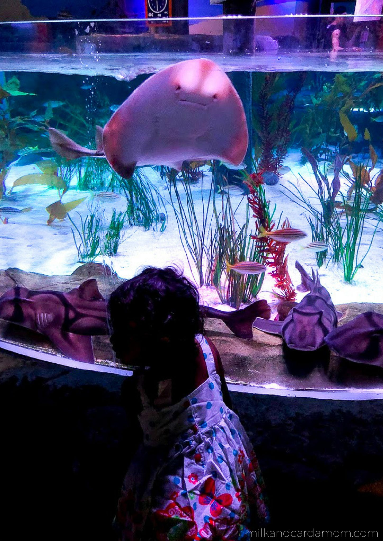 What to do in Melbourne with a Toddler
