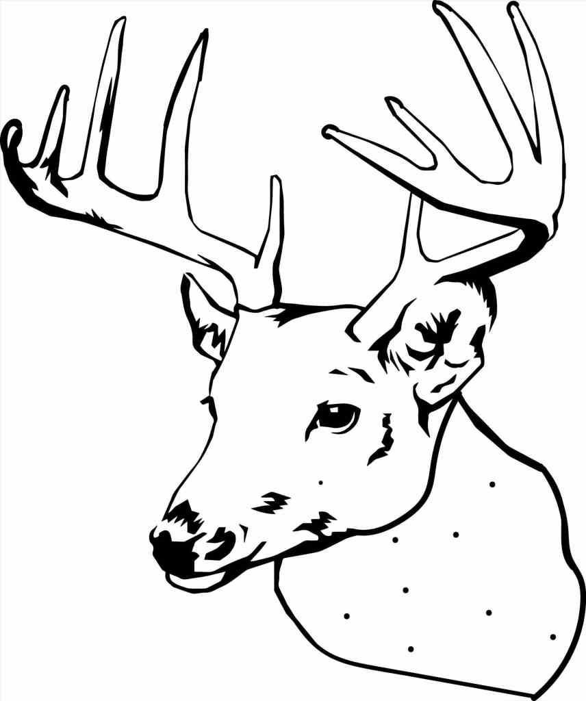 Deer Coloring Pages Collection