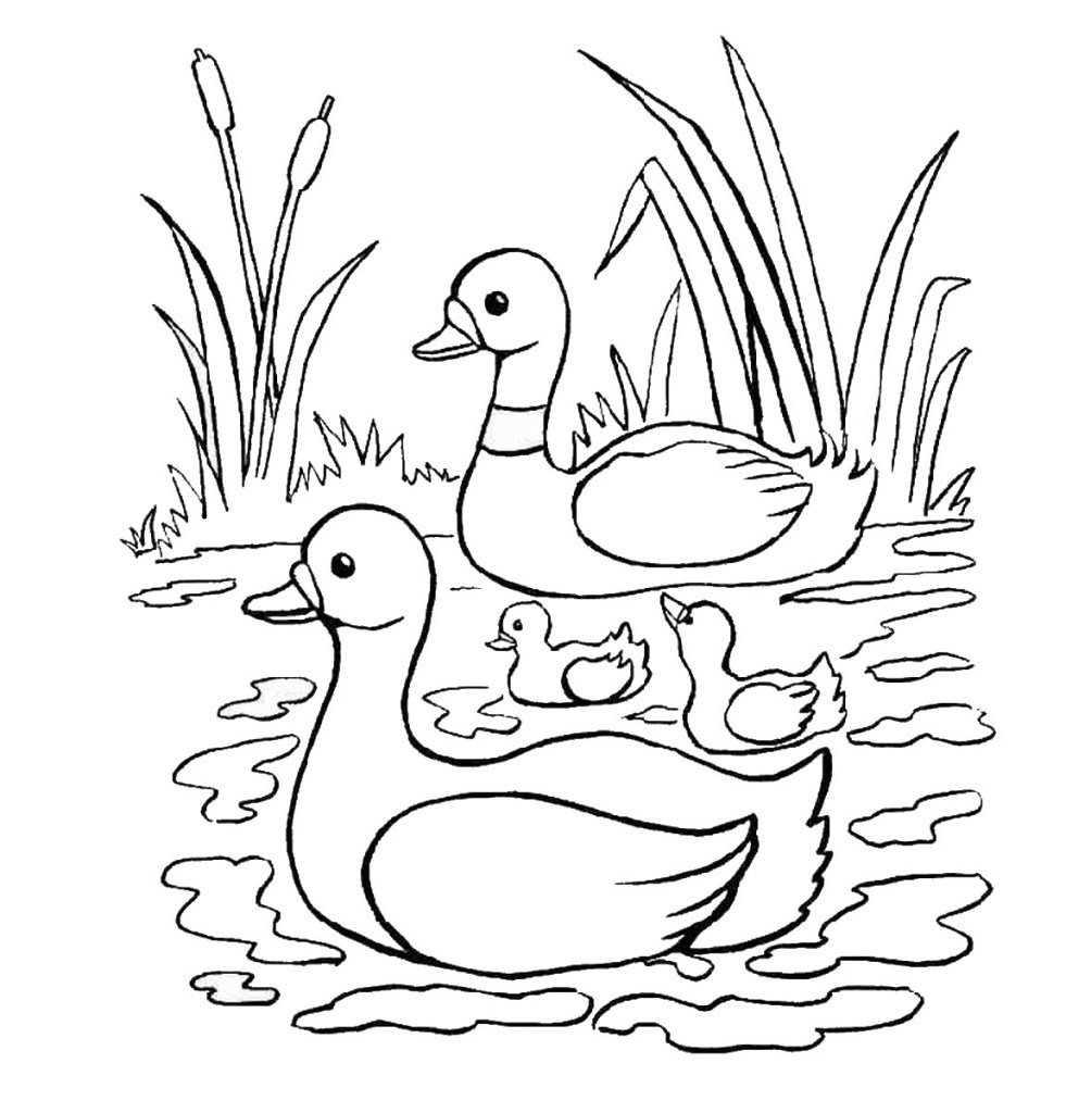 Duck Coloring Pages Download