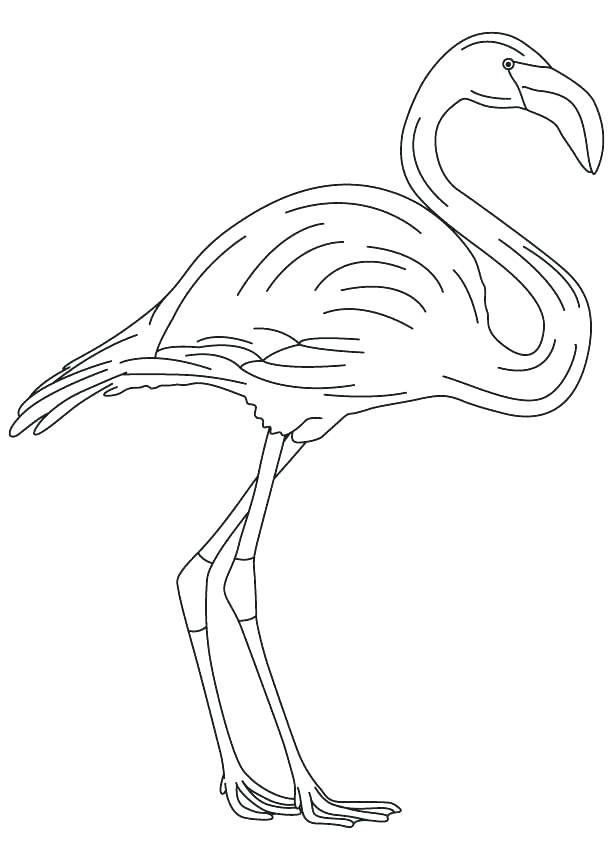 Flamingo Coloring Pages Printable