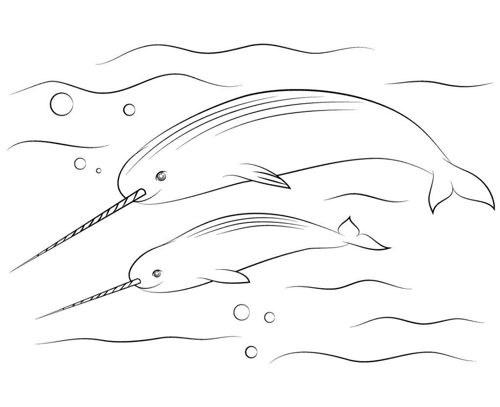 Narwhal Coloring To Print