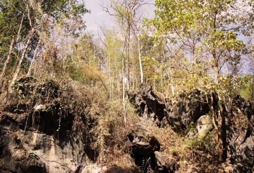 lan-sang-national-park-trees