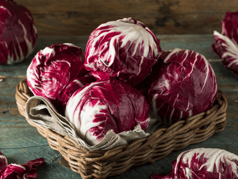 radicchio fall garden crop