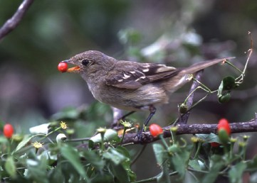 Bird and seed