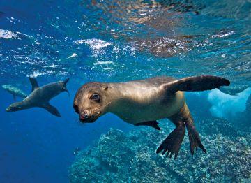 Evoluzione e isole Galapagos