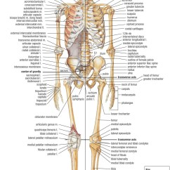 Skeletal System Anterior View Diagram Wiring For Air Conditioner Thermostat Skull Anatomy Free Engine Image User