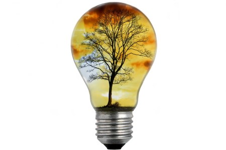 bulb-light-with-tree-1469090454Iuz