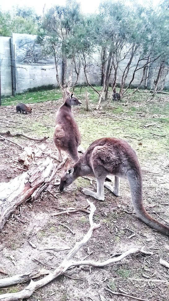 Moonlit Animal Sanctuary,, Melbourne, Australia, Victoria