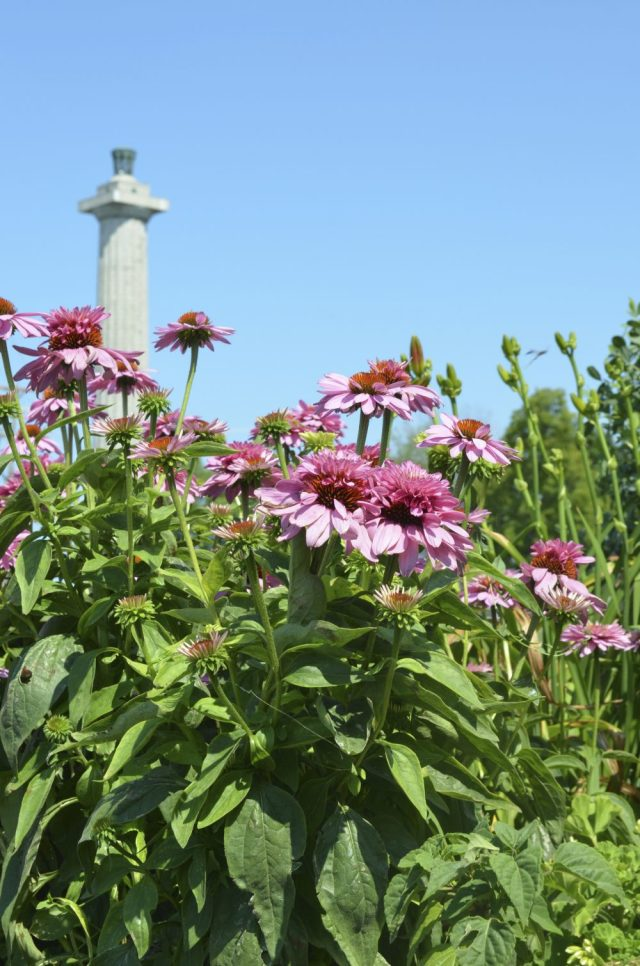 Wildflowers with Perry's Monument
