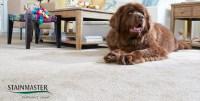 Flooring and Carpet at Miller's Flooring America in ...