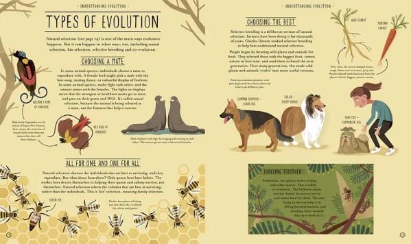 Amazing Evolution P12 13