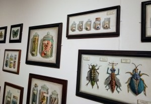 Is This Planet Earth Exhibition. Several pieces of Bio Specimens, oil artwork featuring insects and otherworldly specimens