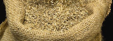 Pre Germinating Seed Milorganite