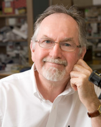 Richard A Flavell, PhD