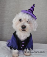 Dog witch costume patterns | FREE PDF DOWNLOAD