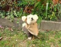 Easy Ewok Dog Costume Patterns - Free to Download - Mimi&Tara