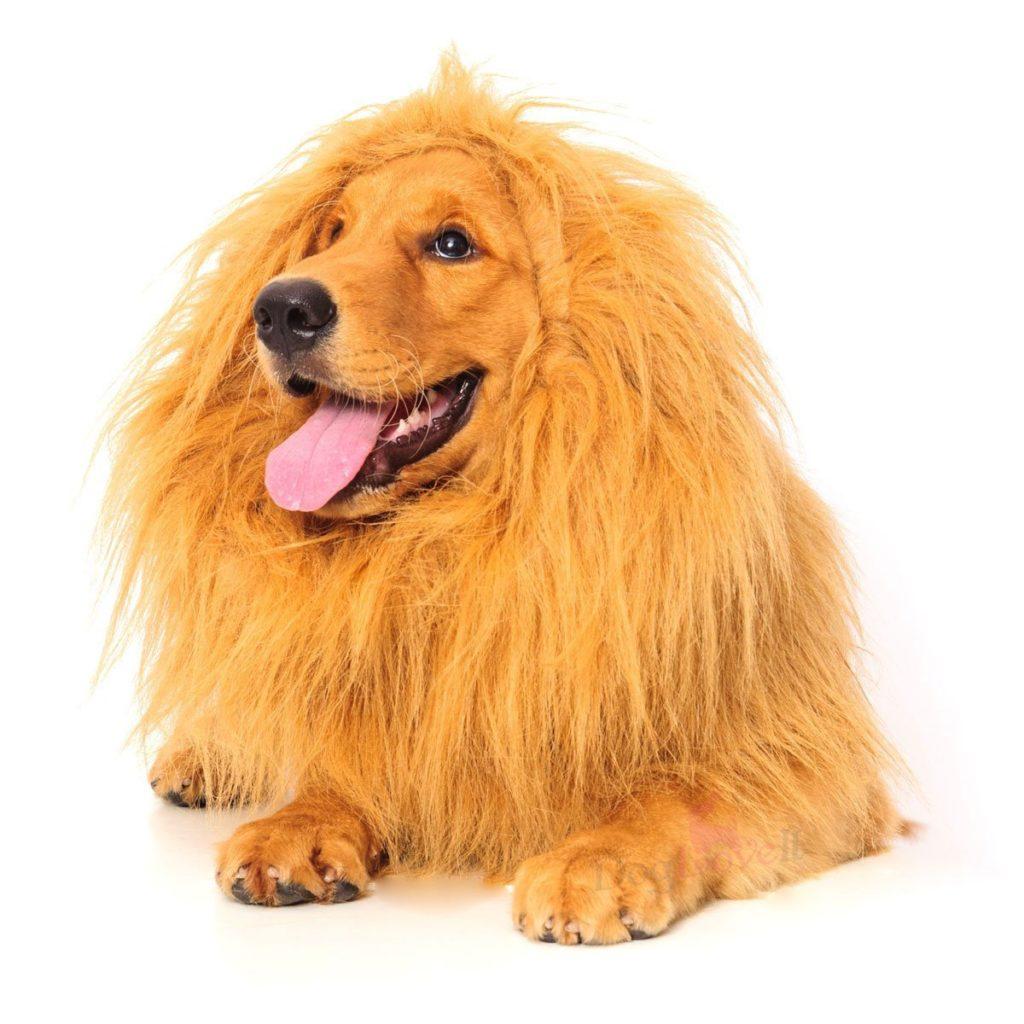 Best dog costume for halloween 2017