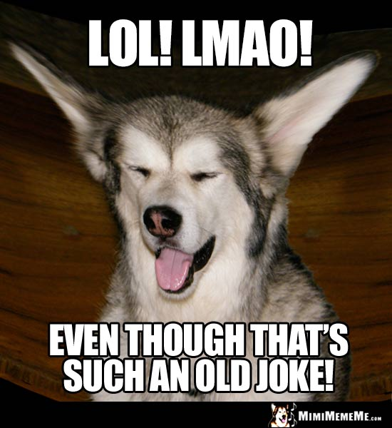 arf ing funny dog memes doggie style jokes clever canine comedy pg 4
