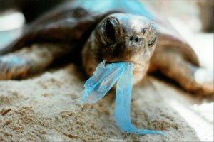 L-Plastic-Bag-Turtle_t580