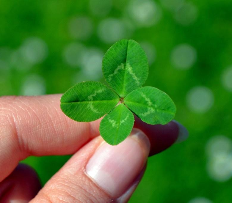 Blogbeitrag Glück, Mimis Wunderland