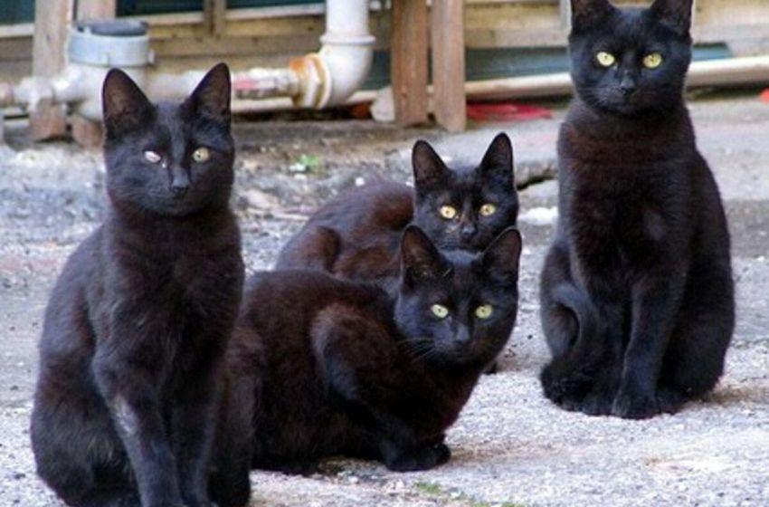 La «fama» de los gatos negros