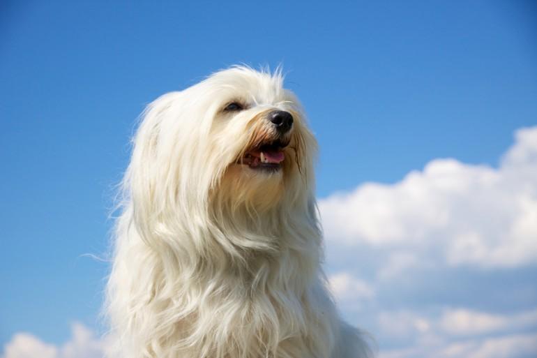 【獣醫師執筆】犬の血便は病気のサイン? 血便の原因と対処法 ...
