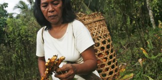 Gloria Bolando, along with the other women in Sitio Ibuan, Lanuza, Surigao del Sur, helps in maintaining the communal herbal garden which is right beside her farm. They planted it with several herbal plants, including duyaw or turmeric (in picture) which they use to heal arthritic pains, skin diseases and digestive acidity. MindaNews Photo by Ruby Thursday