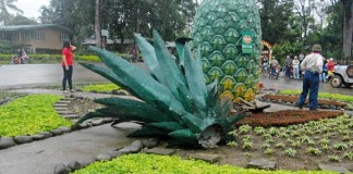 FALLEN ICON. NPA rebels topple this huge pineapple icon located in Camp Phillips, Manolo Fortich in Bukidnon during last Tuesday's attack. Camp Phillips residents are angry why the icon that symbolizes their community was destroyed by the rebels. MindaNews photo by Froilan Gallardo