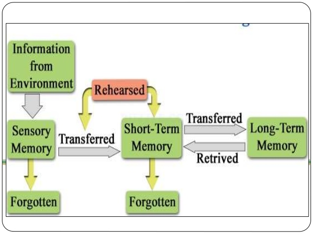 information-processing-theory-Information Processing Approach of Memory