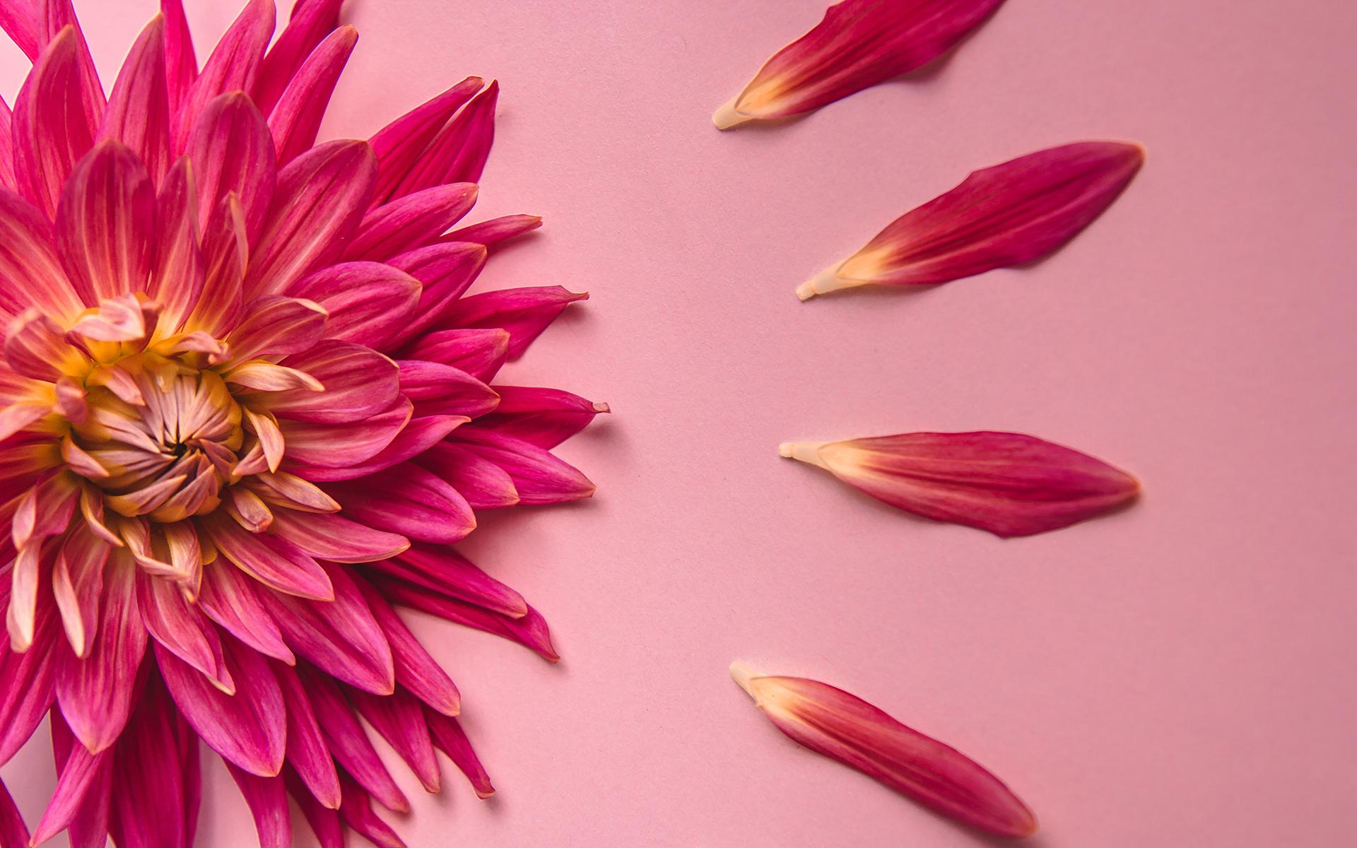 Loving-Kindness Meditation Sharon Salzberg - pink flower on a pink background