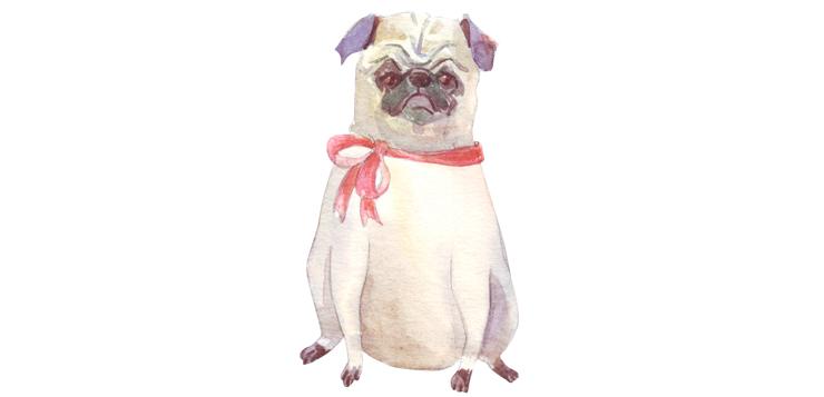 watercolor of grumpy dog, pug breed