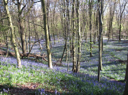 GAD - Generalised Anxiety Disorder - Out of the Darkness: GAD - Generalised Anxiety Disorder - Out of the Darkness: Bluebells.