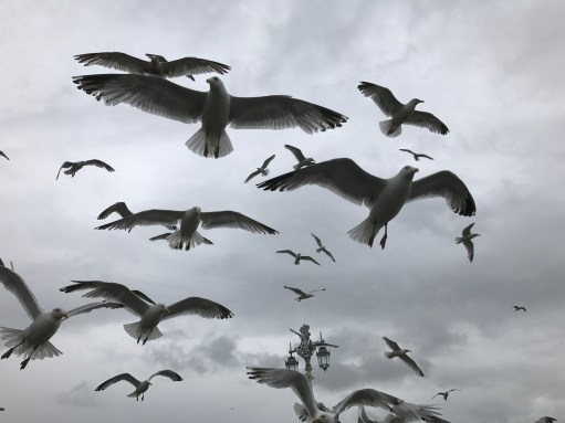 Brighton: Seagulls. What else!