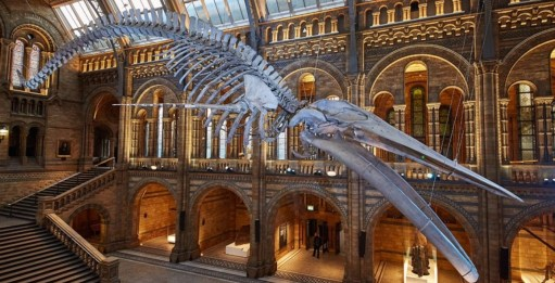 "Outbreak of Common Sense: You don't really want a picture of a beached whale. So here is ""Hope"" the new star of the Natural History Museum. Replacing ""Dippy"" the famous dinosaur of all our childhoods."