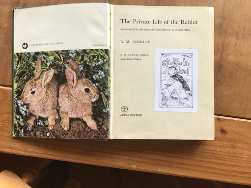 Kate Strudwick: Inside front cover of The Private Life of the Rabbit.