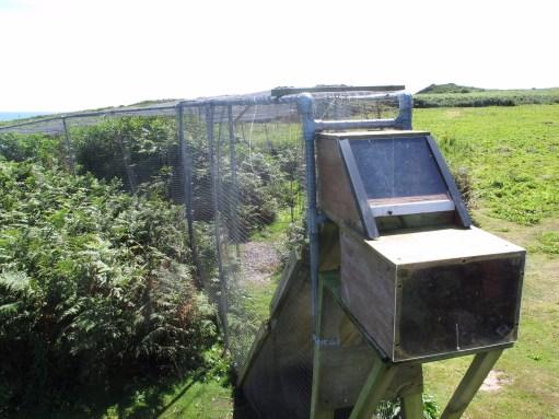 Kenny Birdringer: Heligoland trap box.