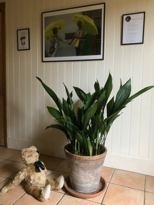 Aspidistra: That's more like it! Not so gloomy here - see how it shines, Bobby!