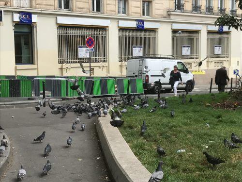 Paris: Feeding time at the zoo. Ahahaha!