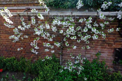 Dunsborough Park Gardens: Not Tulips!