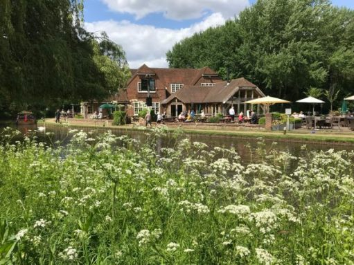 Frank's Walk: Heaven for Diddley. The gentle fronds of cow parsley waving in the breeze. The Wey Navigation and one of her favourite pubs. The Anchor at Pyrford.