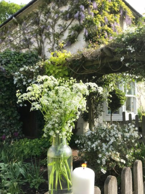 Frank's Walk: Lighting a Candle for Diddley at Laurel Cottage in May.