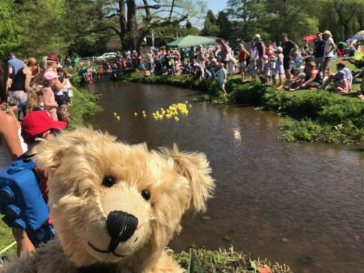 Teddy Bears' Picnic: And it's the DUCK RACE!